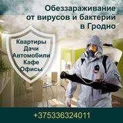 Первая в Гродно выездная дезинфекционная служба